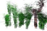 web tree